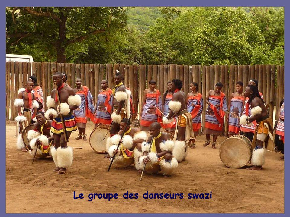 Le groupe des danseurs swazi
