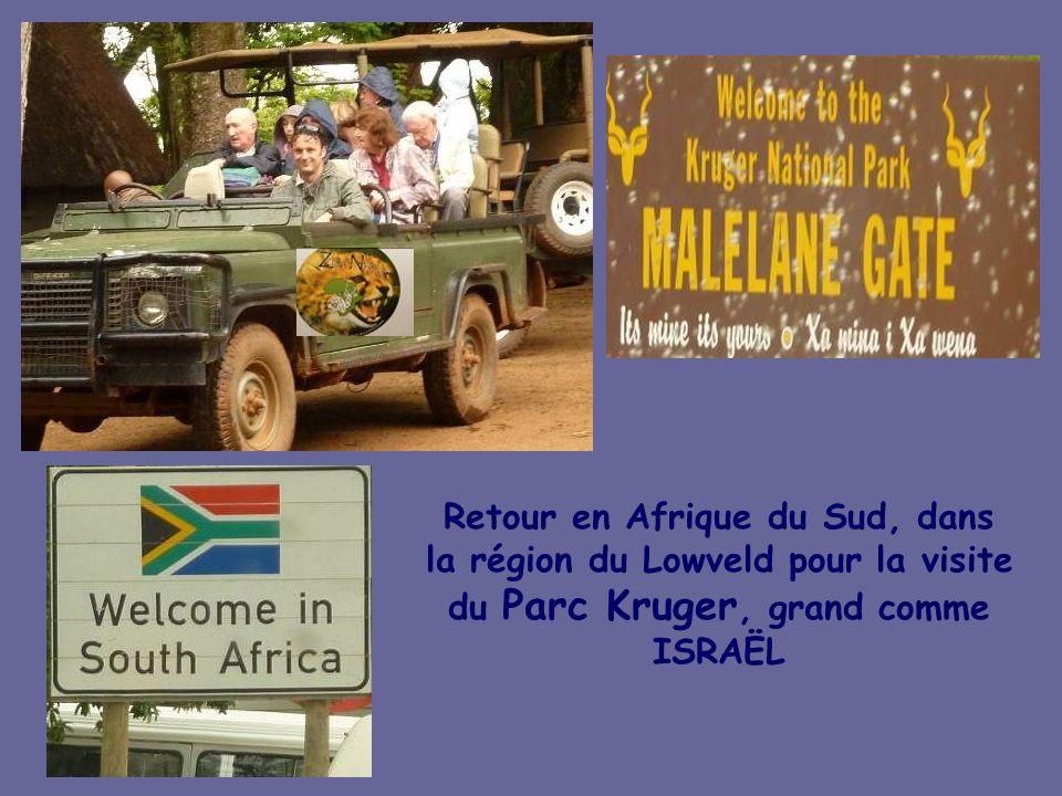 Retour en Afrique du Sud, dans la région du Lowveld pour la visite du Parc Kruger, grand comme ISRAËL