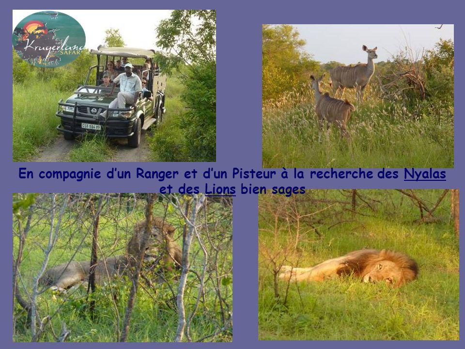 En compagnie d'un Ranger et d'un Pisteur à la recherche des Nyalas et des Lions bien sages