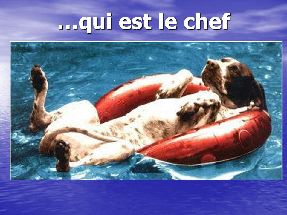 …qui est le chef Ici, on ne connait pas….