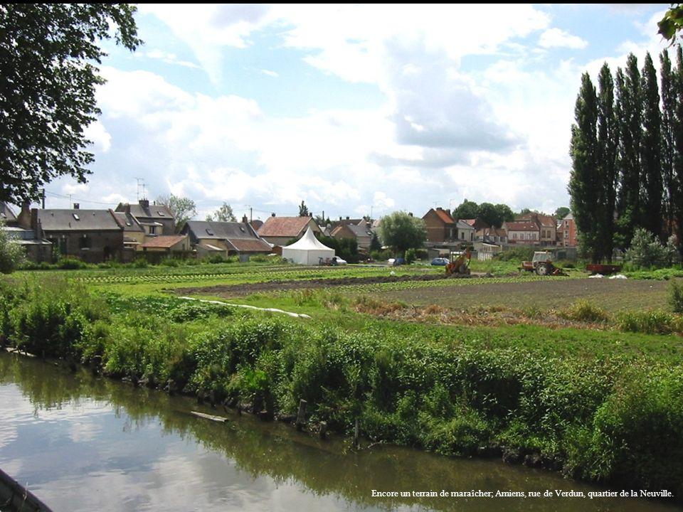 Encore un terrain de maraîcher; Amiens, rue de Verdun, quartier de la Neuville.