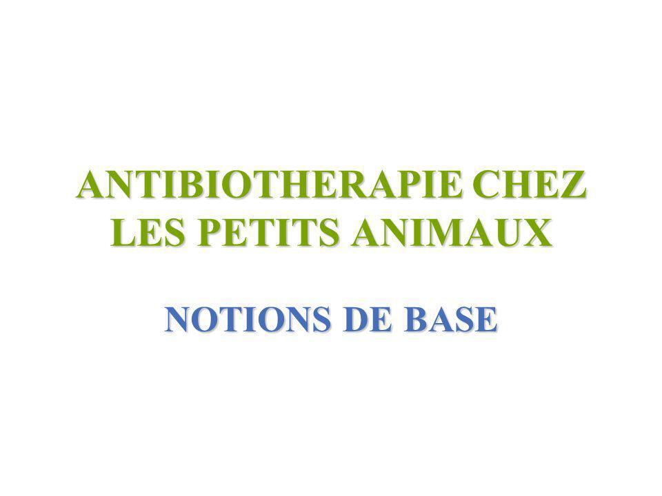 ANTIBIOTHERAPIE CHEZ LES PETITS ANIMAUX