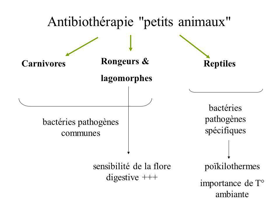 Antibiothérapie petits animaux