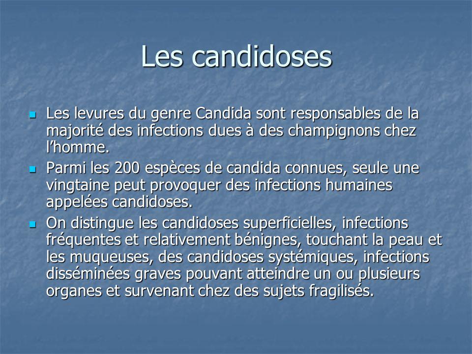 Les candidoses Les levures du genre Candida sont responsables de la majorité des infections dues à des champignons chez l'homme.