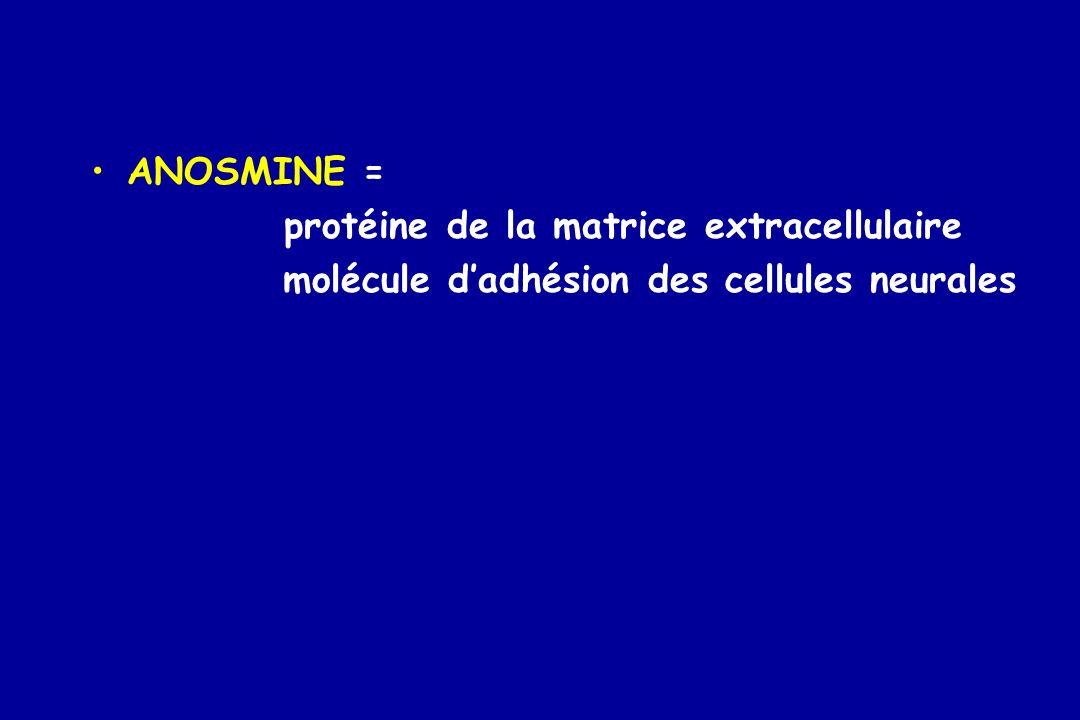 ANOSMINE = protéine de la matrice extracellulaire molécule d'adhésion des cellules neurales