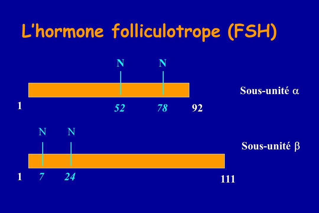 L'hormone folliculotrope (FSH)