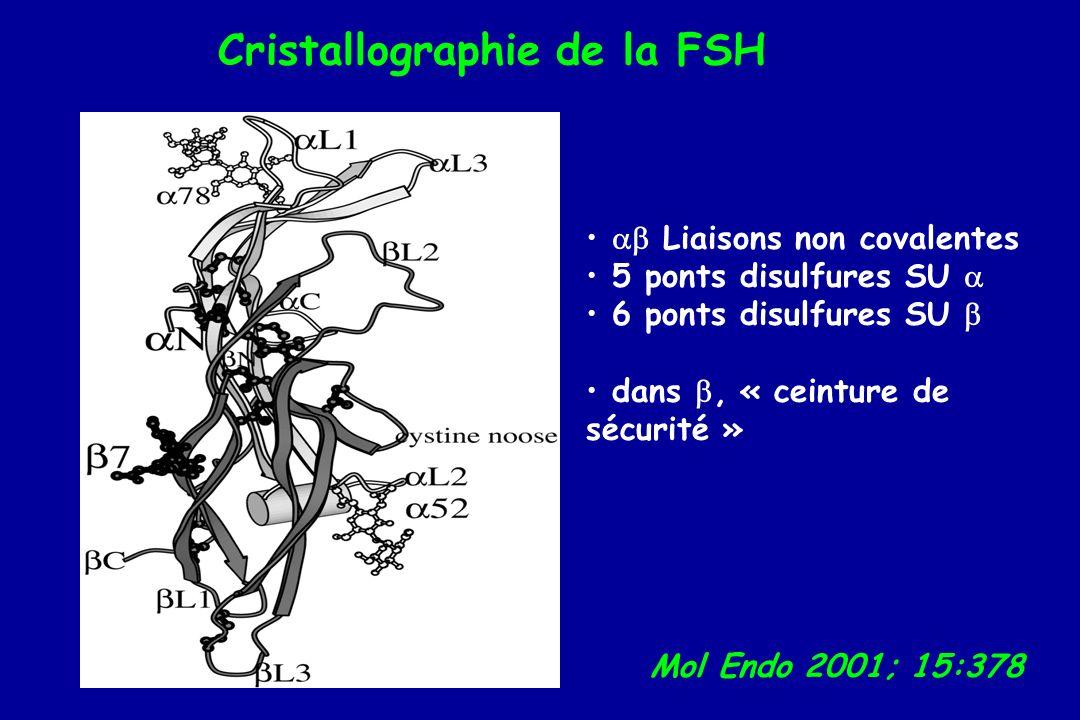 Cristallographie de la FSH