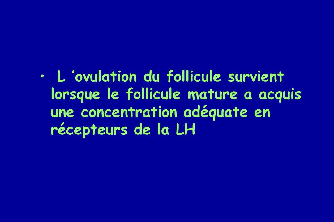 L 'ovulation du follicule survient lorsque le follicule mature a acquis une concentration adéquate en récepteurs de la LH