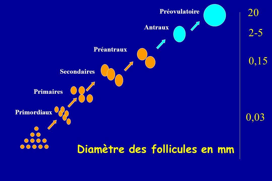 Diamètre des follicules en mm