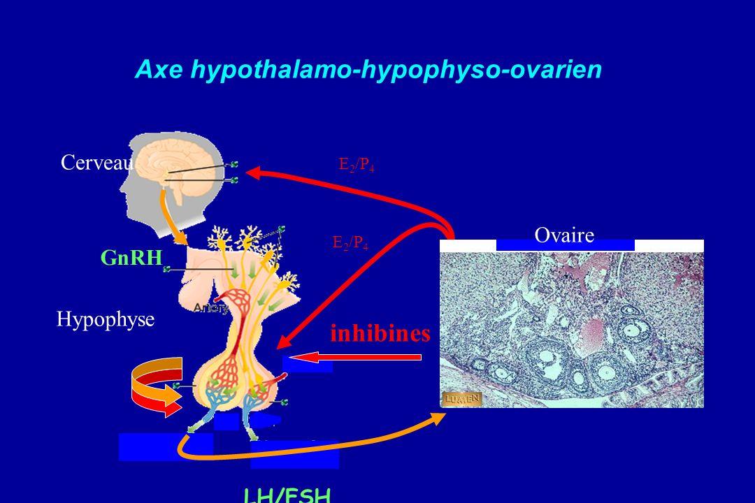 Axe hypothalamo-hypophyso-ovarien