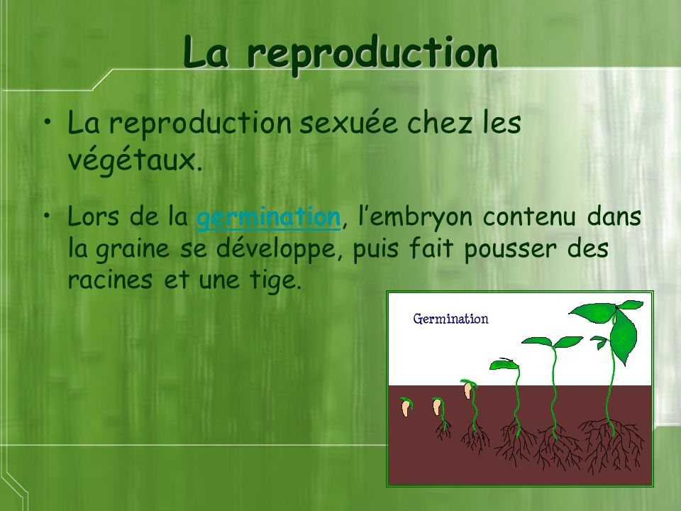 La reproduction La reproduction sexuée chez les végétaux.