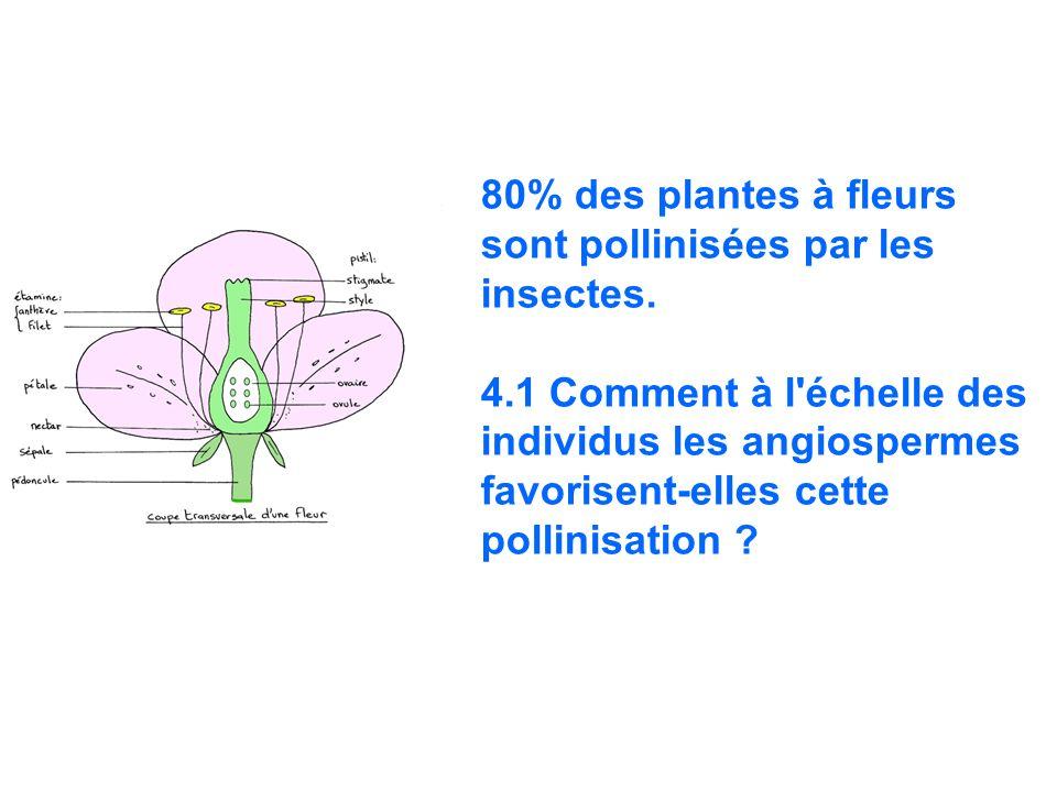 80% des plantes à fleurs sont pollinisées par les insectes.