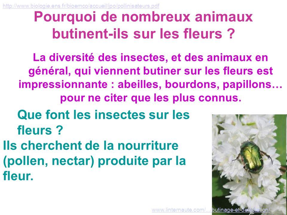 Pourquoi de nombreux animaux butinent-ils sur les fleurs