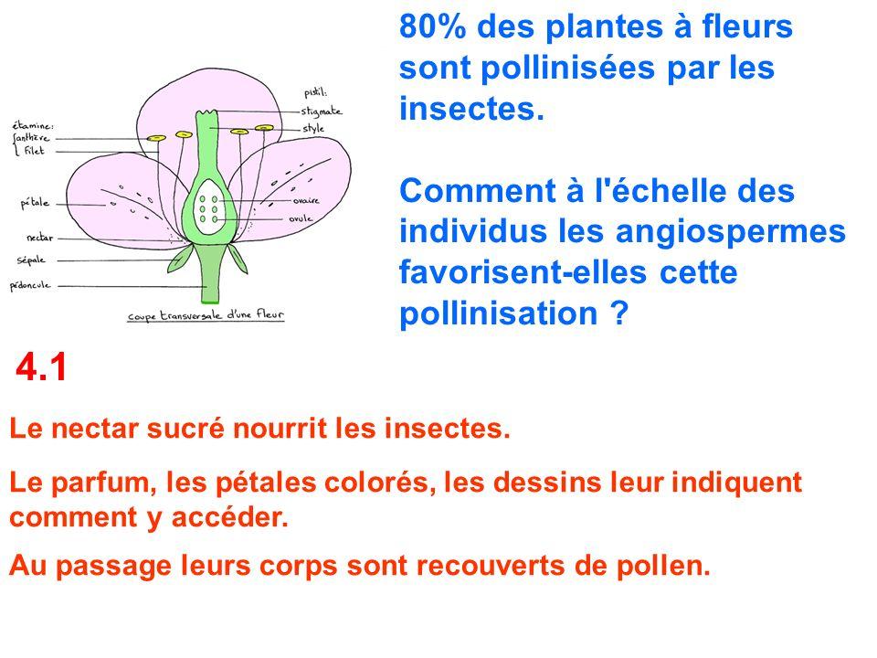 4.1 80% des plantes à fleurs sont pollinisées par les insectes.