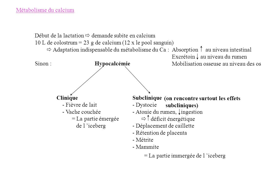 Métabolisme du calcium