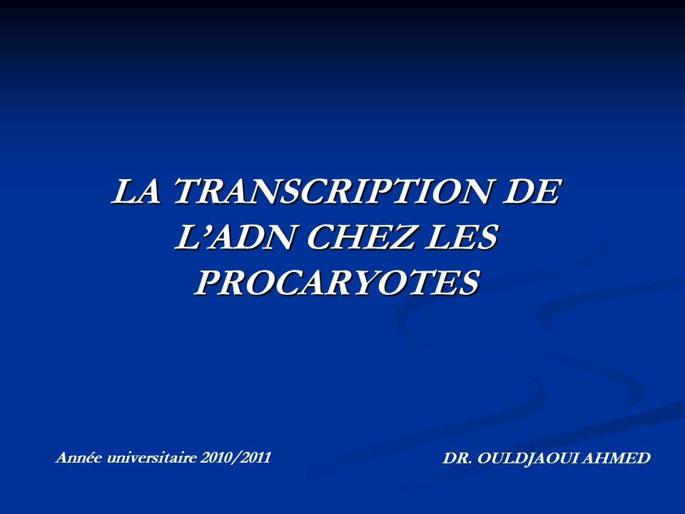 LA TRANSCRIPTION DE L'ADN CHEZ LES PROCARYOTES