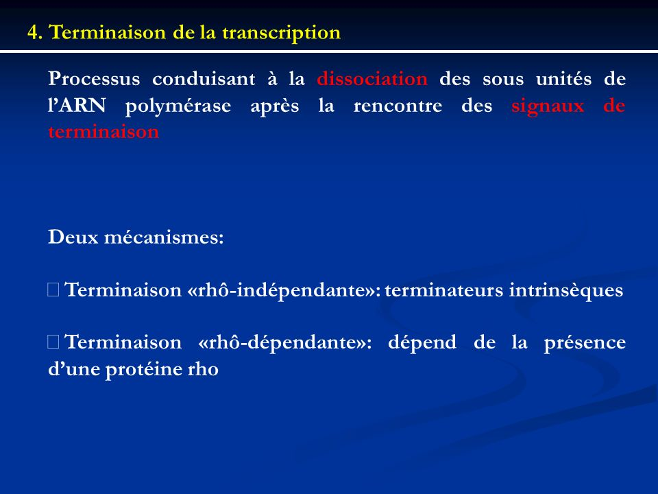 4. Terminaison de la transcription