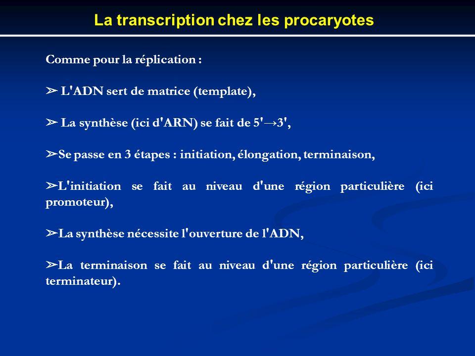 La transcription chez les procaryotes