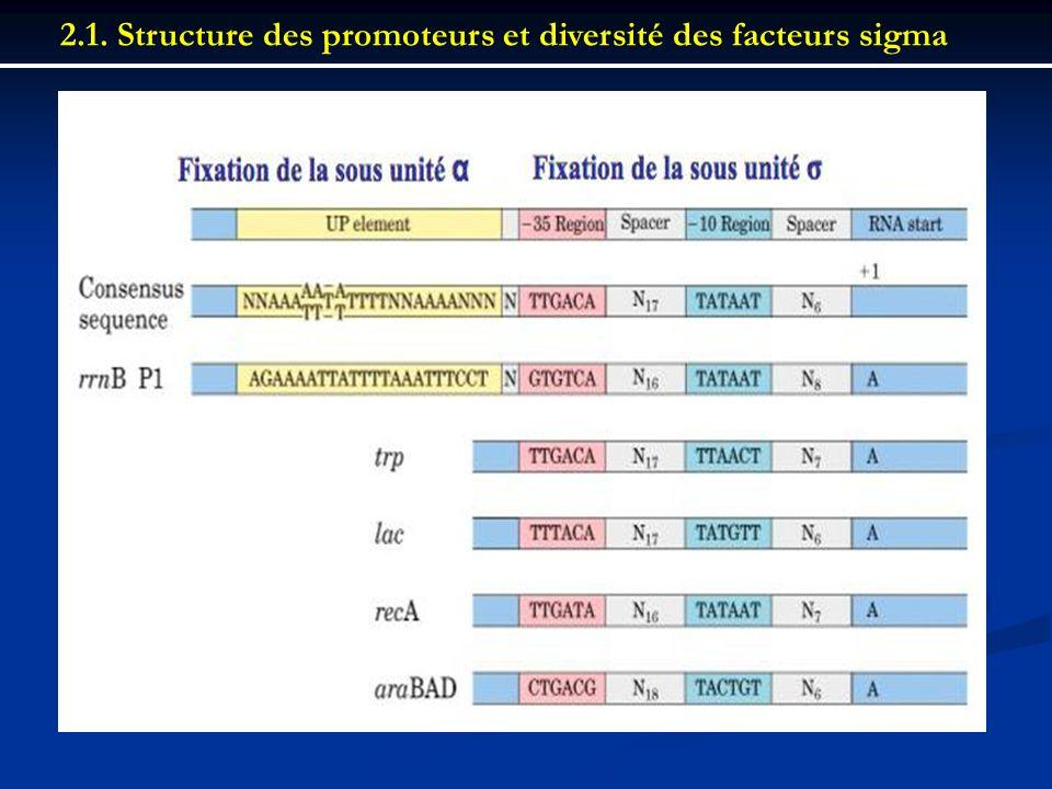 2.1. Structure des promoteurs et diversité des facteurs sigma