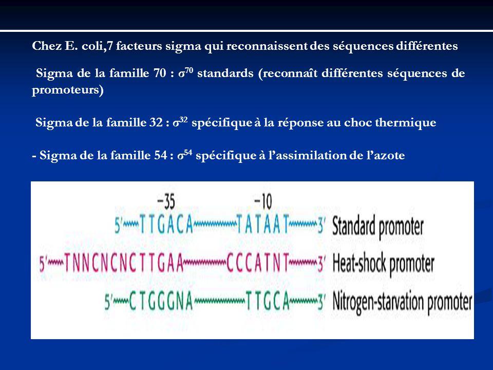 Chez E. coli,7 facteurs sigma qui reconnaissent des séquences différentes