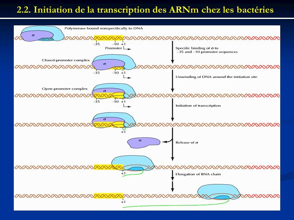 2.2. Initiation de la transcription des ARNm chez les bactéries