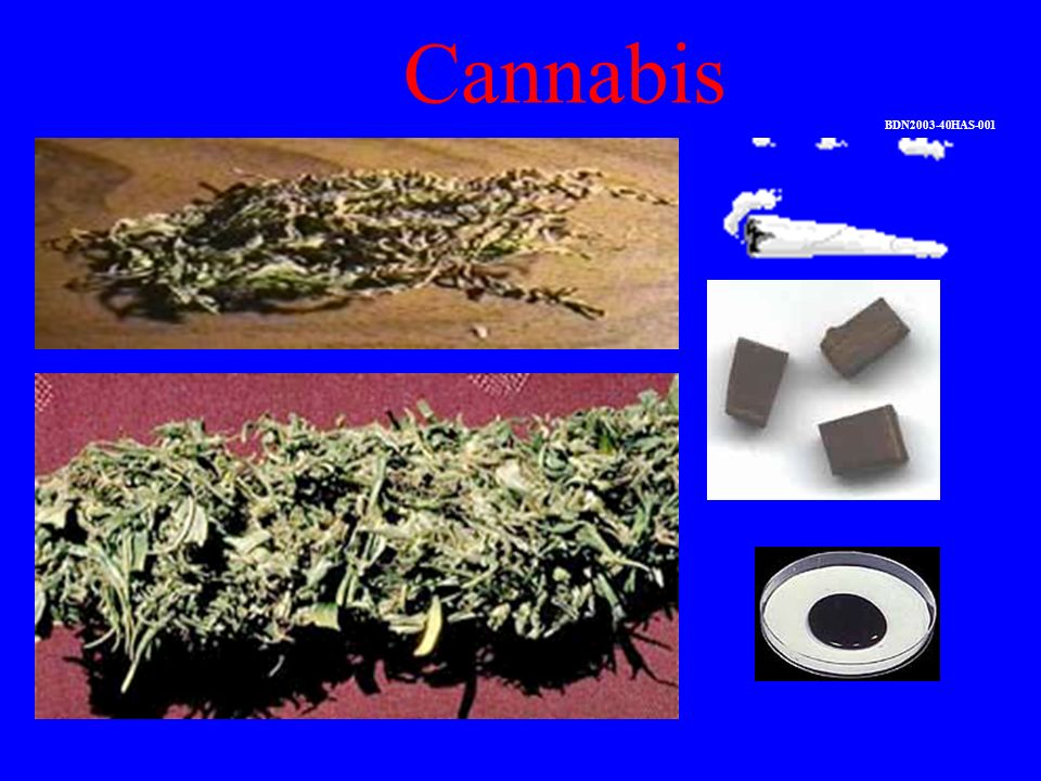 Cannabis BDN2003-40HAS-001