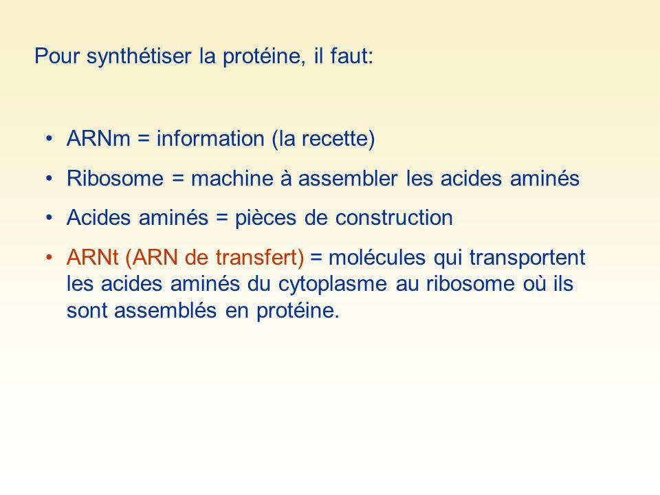 Pour synthétiser la protéine, il faut: