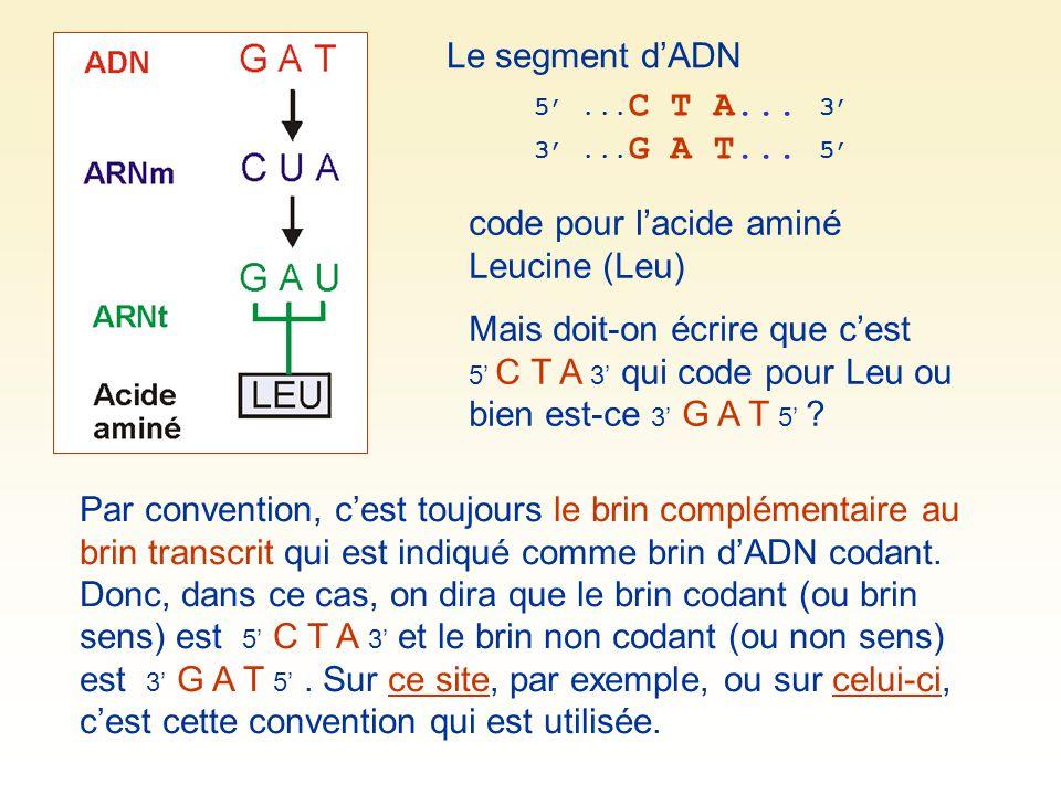 code pour l'acide aminé Leucine (Leu)