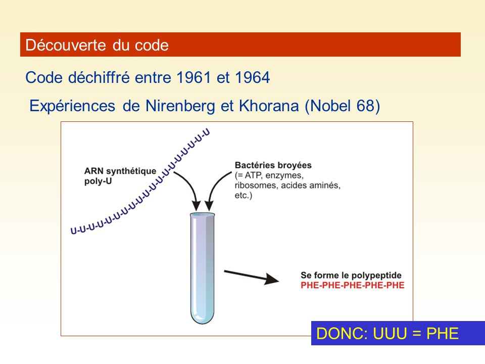 Découverte du code Code déchiffré entre 1961 et 1964. Expériences de Nirenberg et Khorana (Nobel 68)