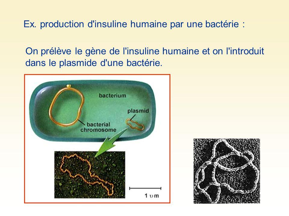 Ex. production d insuline humaine par une bactérie :