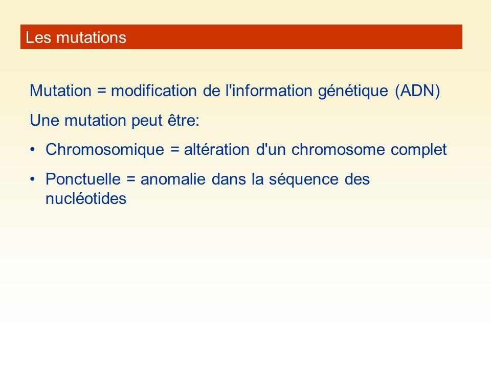 Les mutations Mutation = modification de l information génétique (ADN) Une mutation peut être: Chromosomique = altération d un chromosome complet.