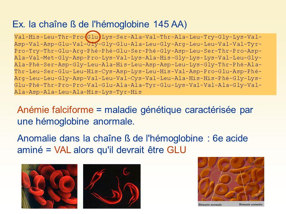 Ex. la chaîne ß de l hémoglobine 145 AA)