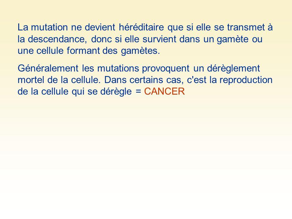 La mutation ne devient héréditaire que si elle se transmet à la descendance, donc si elle survient dans un gamète ou une cellule formant des gamètes.