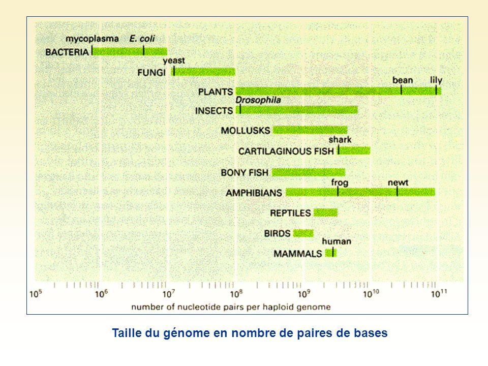 Taille du génome en nombre de paires de bases