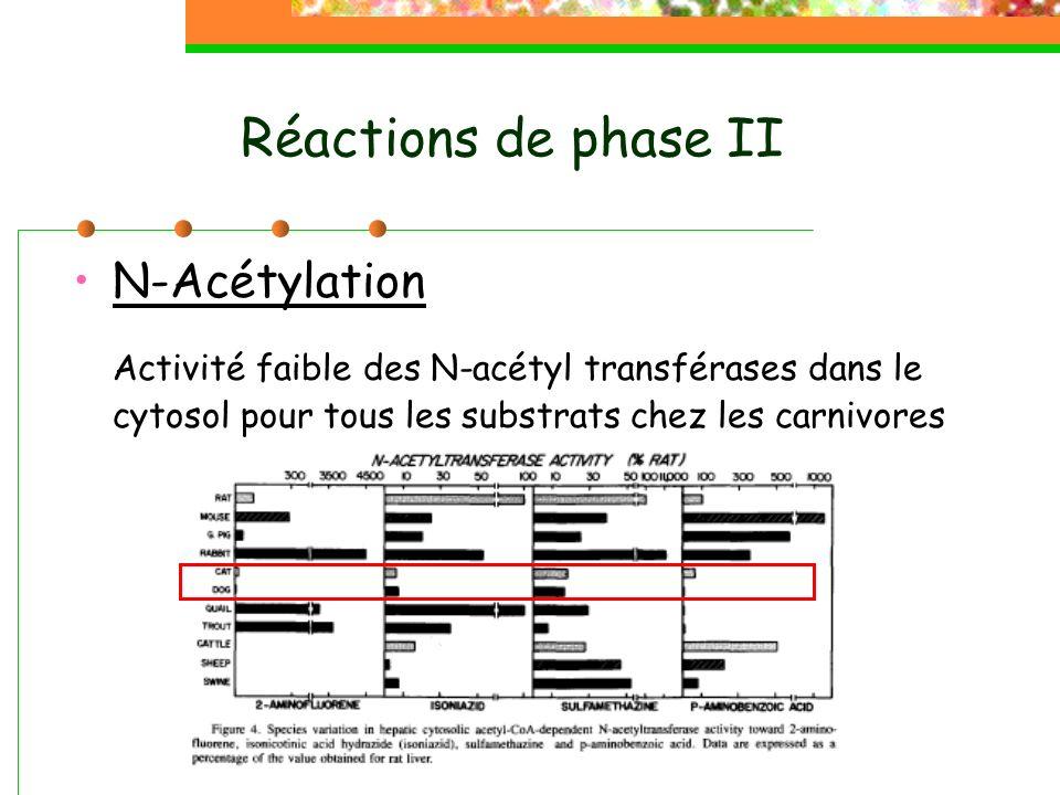 Réactions de phase II N-Acétylation.