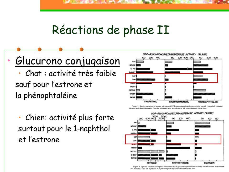 Réactions de phase II Glucurono conjugaison