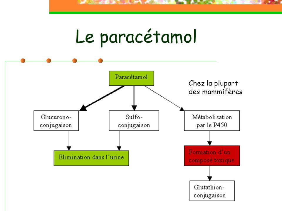 Le paracétamol Chez la plupart des mammifères