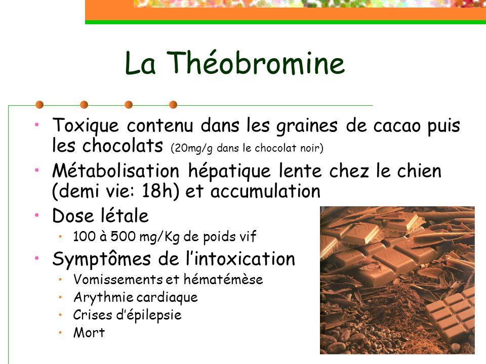La Théobromine Toxique contenu dans les graines de cacao puis les chocolats (20mg/g dans le chocolat noir)
