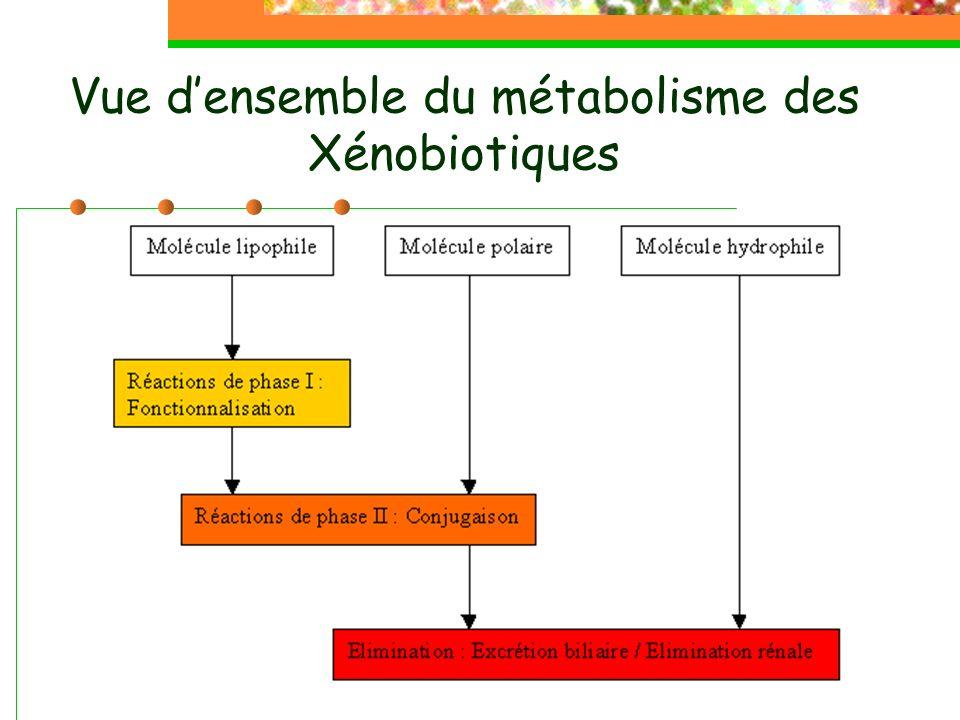 Vue d'ensemble du métabolisme des Xénobiotiques