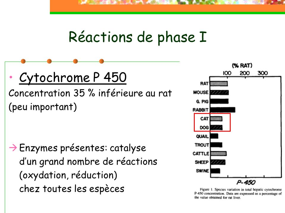 Réactions de phase I Cytochrome P 450