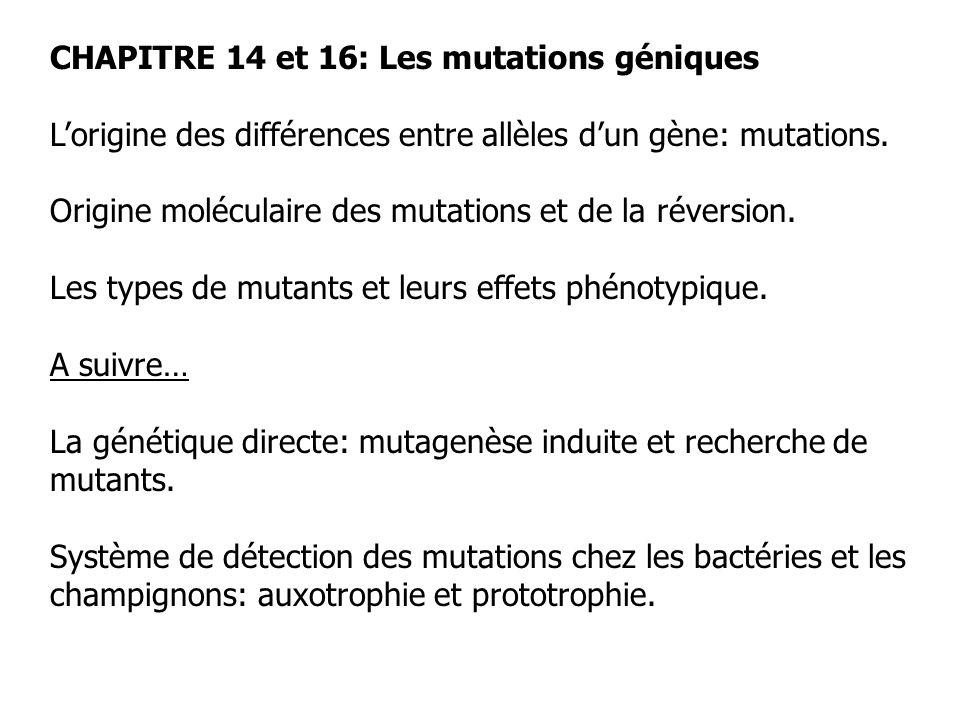 CHAPITRE 14 et 16: Les mutations géniques