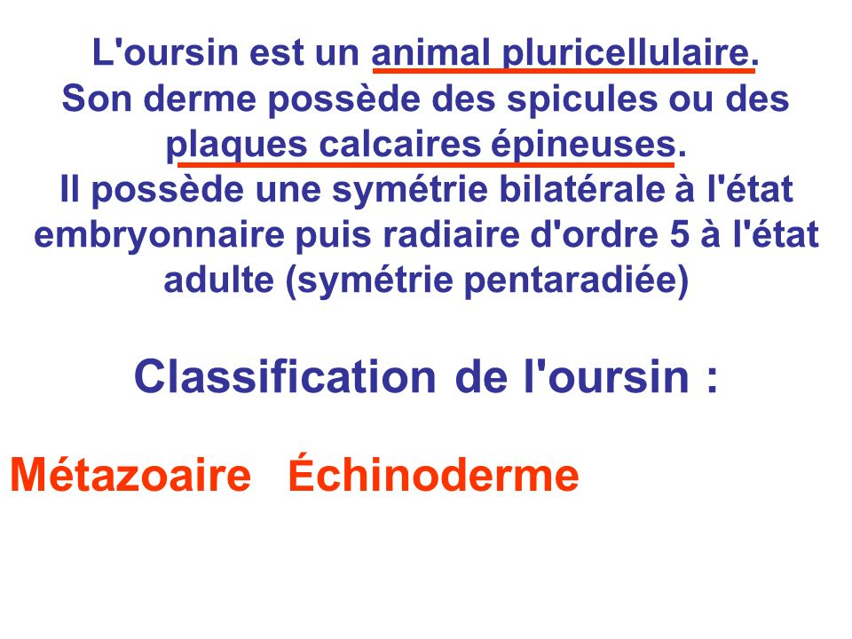 Classification de l oursin :