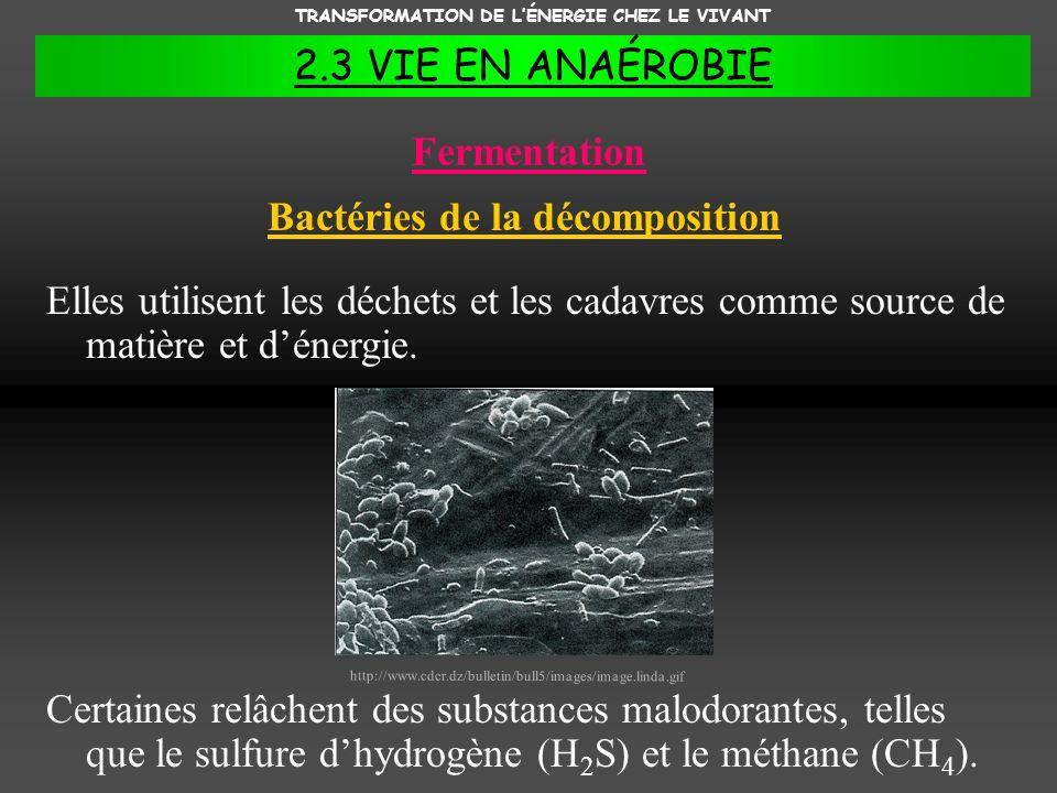 Fermentation Bactéries de la décomposition