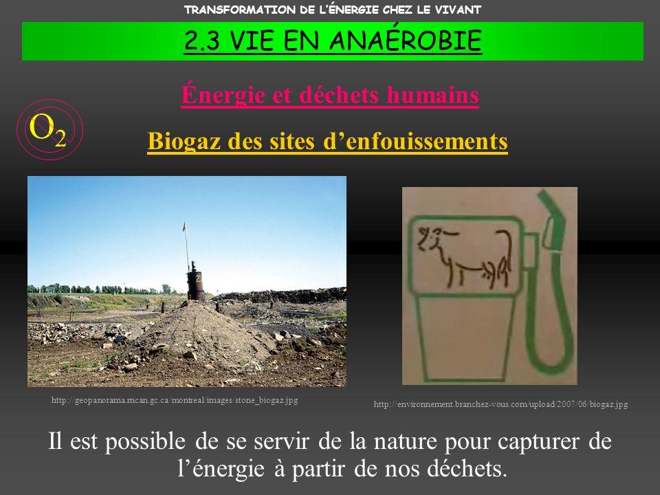 Énergie et déchets humains