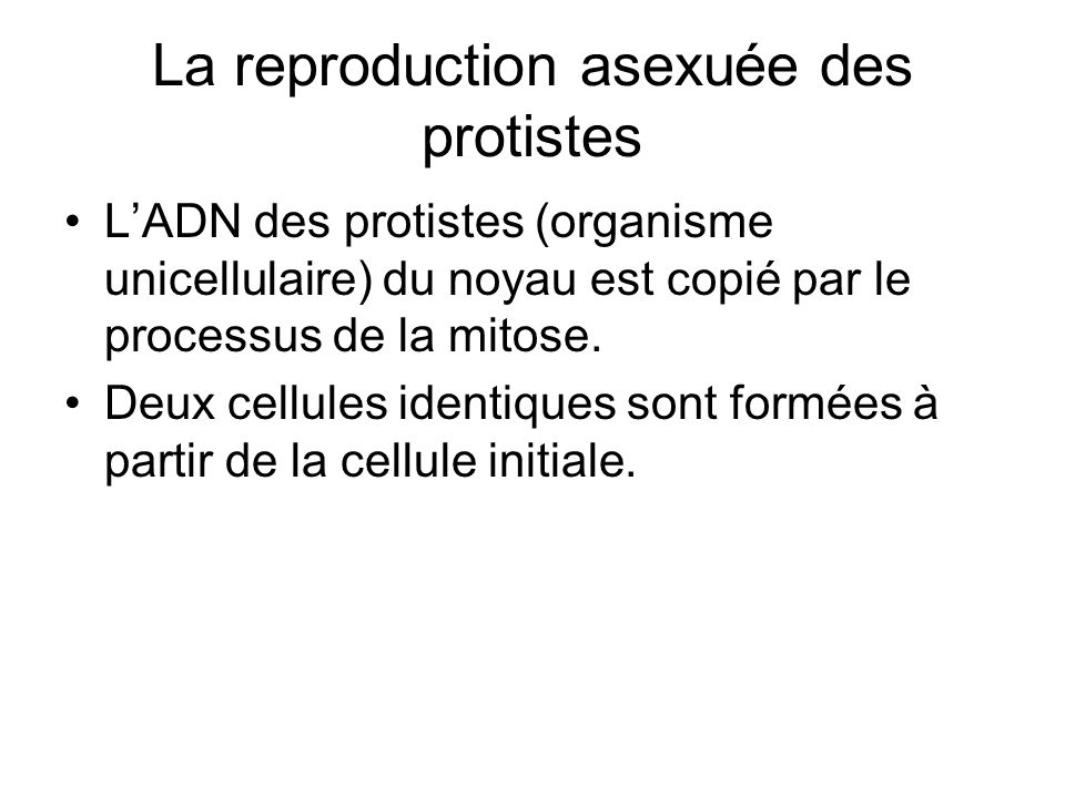 La reproduction asexuée des protistes