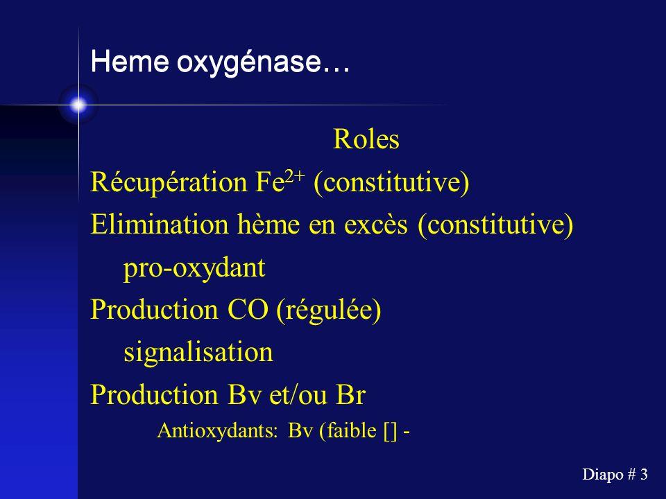 Récupération Fe2+ (constitutive)