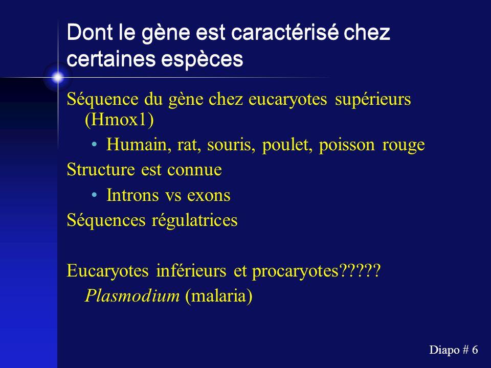 Dont le gène est caractérisé chez certaines espèces