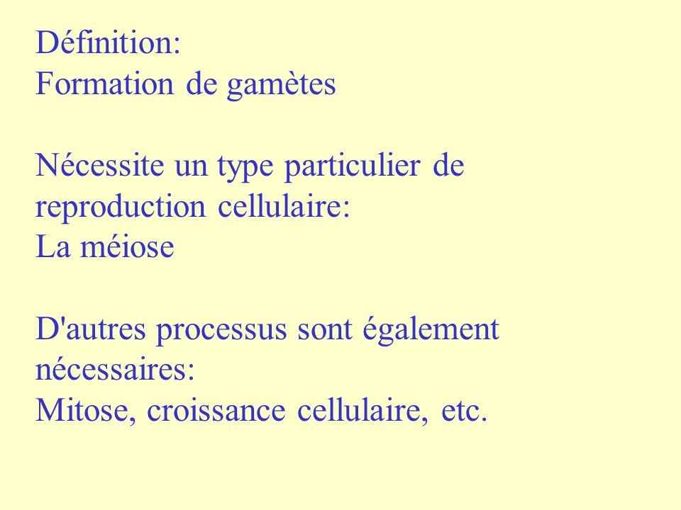 Définition: Formation de gamètes. Nécessite un type particulier de reproduction cellulaire: La méiose.