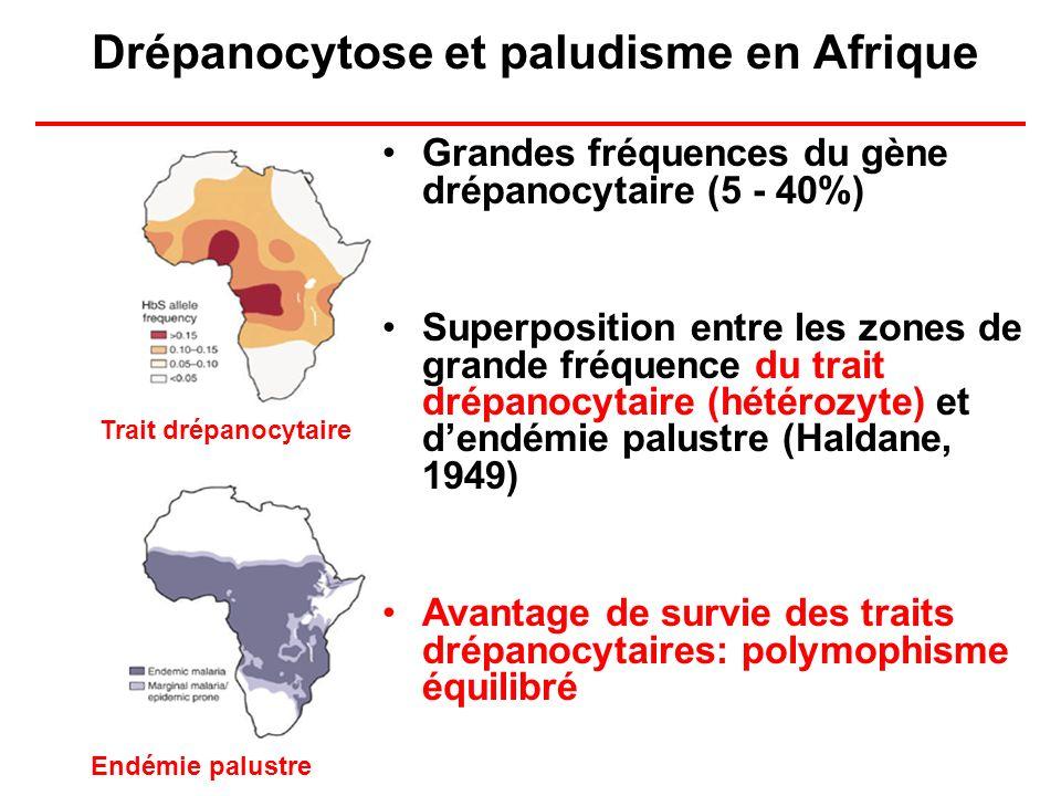 Drépanocytose et paludisme en Afrique