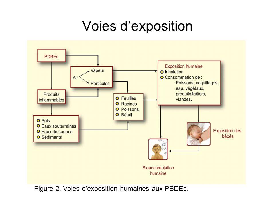 Voies d'exposition Figure 2. Voies d'exposition humaines aux PBDEs.